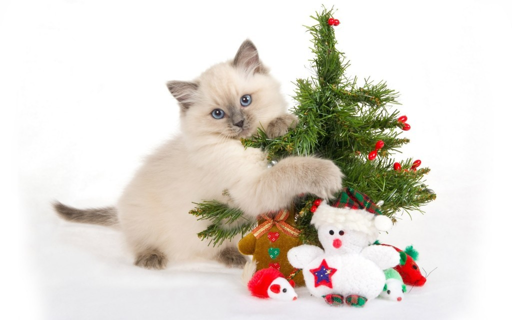 cats-animals-kittens-pets-white-background-christmas-tree