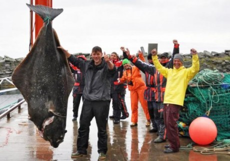 German angler Marco Liebenow with a 513-pound Atlantic halibut caught off Norway. source - unknown